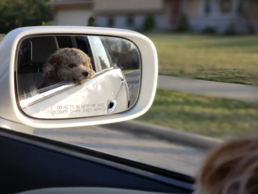 Is It Okay To Have Dogs In The Front Seat?