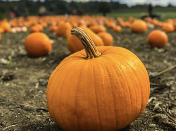 Origins of National Pumpkin Day