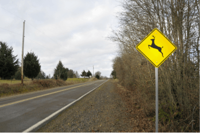 5 Driving Tips for Deer Season | Halloween Safety