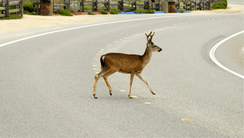 5 Driving Tips for Deer Season | Halloween Safety image #2